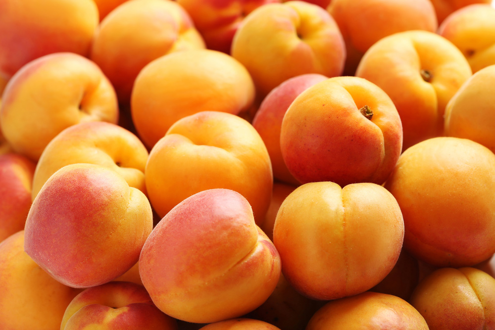 Aprikosen Konfiture